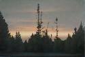 BB0433 - Pines at Dusk - 24x36