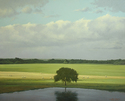 BB1623 - Reflecting Elm with Breaking Light on the Horizon - 42x52